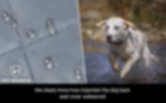 灰色豪华款坐垫A+_970X600_1.jpg