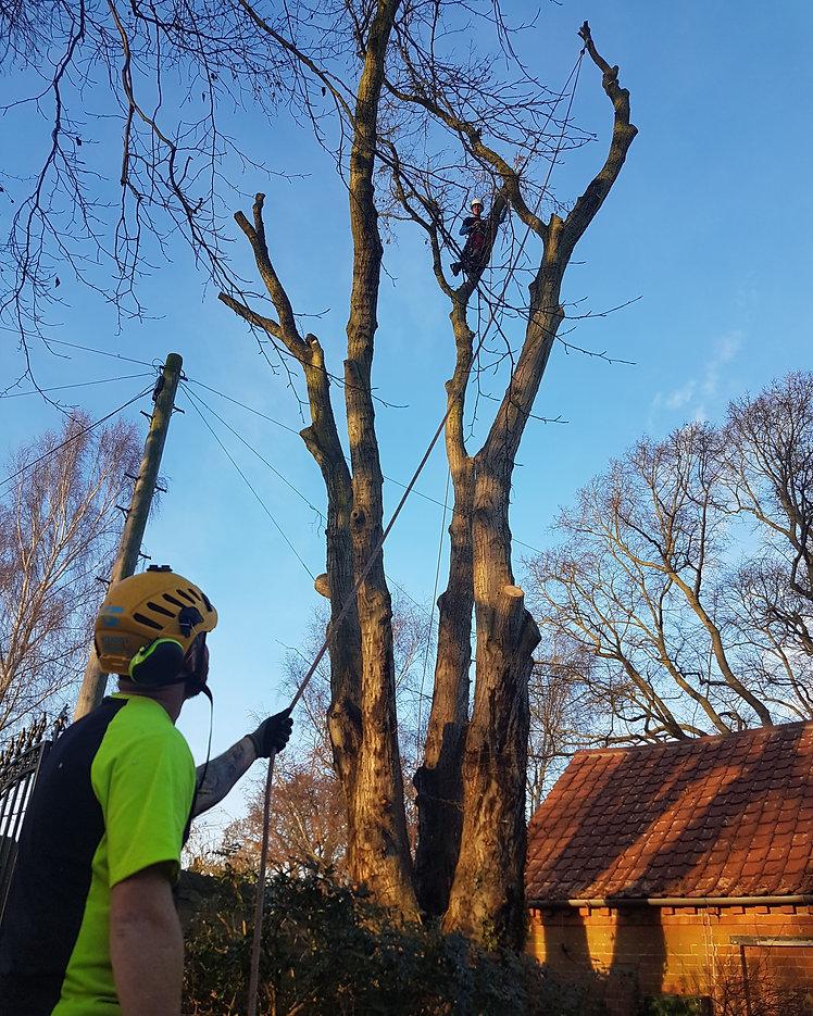 Ben Creasey Tree Services, Tree Surgeon