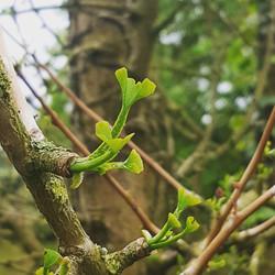 ben creasey tree services