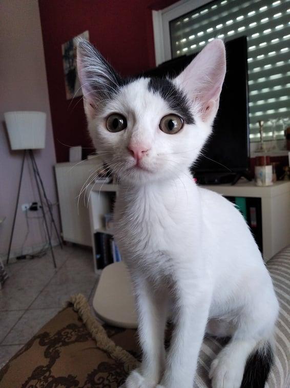 Τσίκο, 5 μηνών