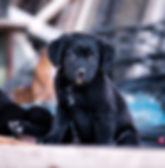 Lara2.jpg