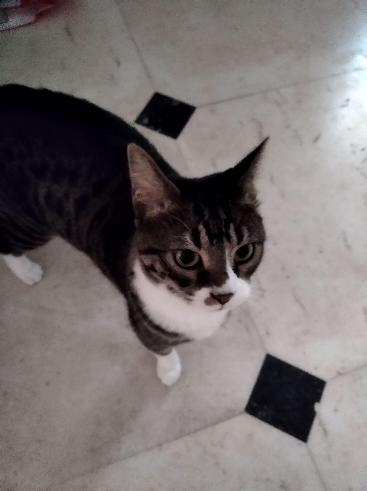 Φούσκας, 9 μηνών