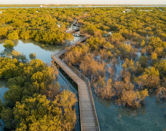 Jubail Mangroves Park (1).jpg