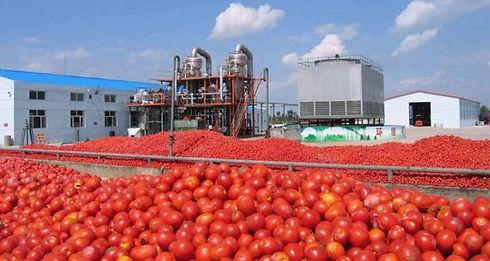 photo conserve tomate.jpg