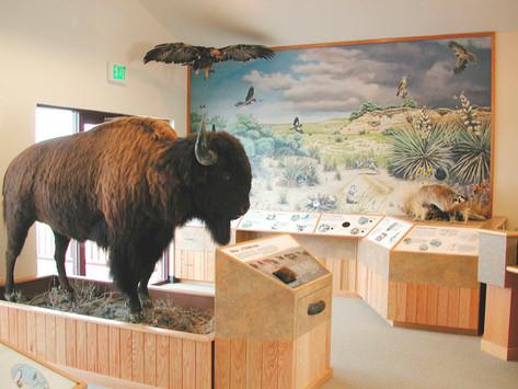 Prairie Bison Install