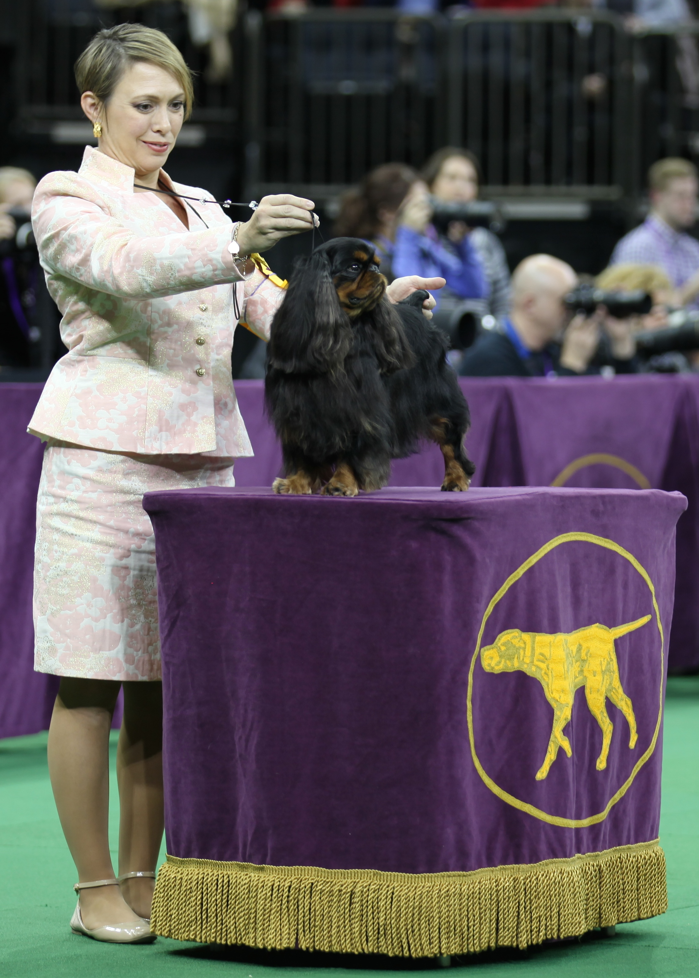 Derby_Westminster2015_ToyGroup