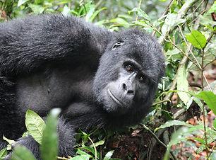 itin-uganda-1.jpg