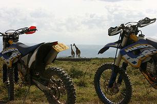 bike-only-wildlife-view.jpg