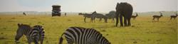 Beautiful Safari Settings