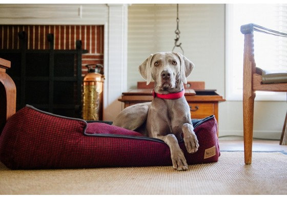 Houndstooth Lounge Bed - Cayenne Red