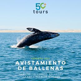 Avistamiento de Ballenas. San Carlos, Loreto, La Paz, Balandra,