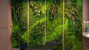 Stabilizētu sūnu, augu un ziedu sienas