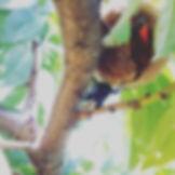 くわがた発見!低農薬なので虫も来ます__#くわがた #低農薬 #桃 #桃狩り #