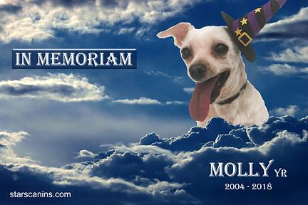 2018-Molly YR (2004-2018).jpg
