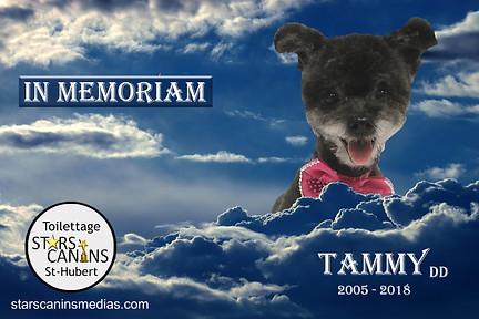 2018-Tammy DD (2005-2018).jpg