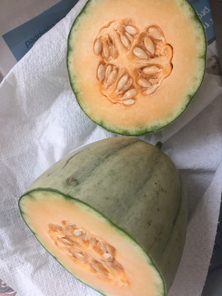 Melon from the greenhouse