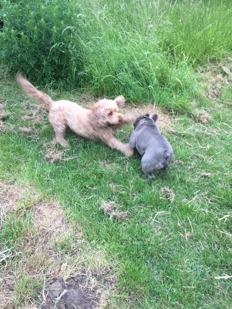 Deisel and Bonnie playing
