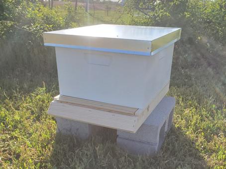 We've got Hives!