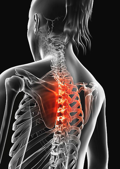 human-thoracic-spine-pain-sebastian-kaul