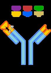 255px-Antibody.svg.png