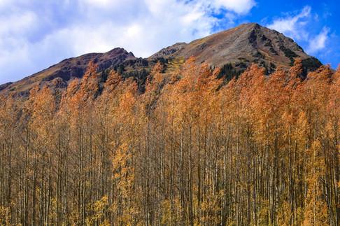 Aspen groves 2