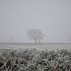 Sharp Frost