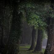 Tree tops rain.jpg