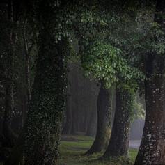 Tree tops rain