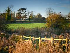 1_ Preservation of Landscape - 'Pines Field'
