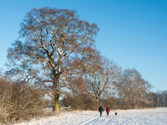 A Wintery Walk John Haddon