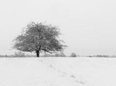 Lone Tree Paul Wiles