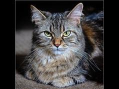 The Cat's Whiskers Ken Brendon