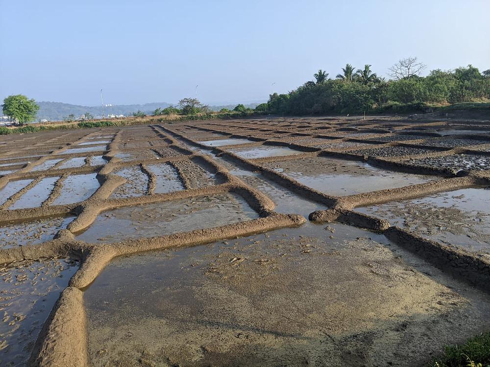 Salt pans, Ribandar, Goa