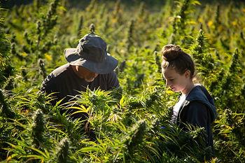 Hemp products, cbd, organic hemp, organic cbd, delta 8, delta-8 products, organic farming, cbd tincture, cbd gummies, cbd edibles, cbd vape, cbd Vape pen, delta 8 cartridge, delta-8 vape, smoking cbd, smoking organic cbd, organic cbd in the Hudson valley, indica, sativa,