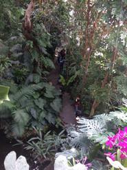 Atelier le silence des plantes aux grandes serres du jardin des Plantes