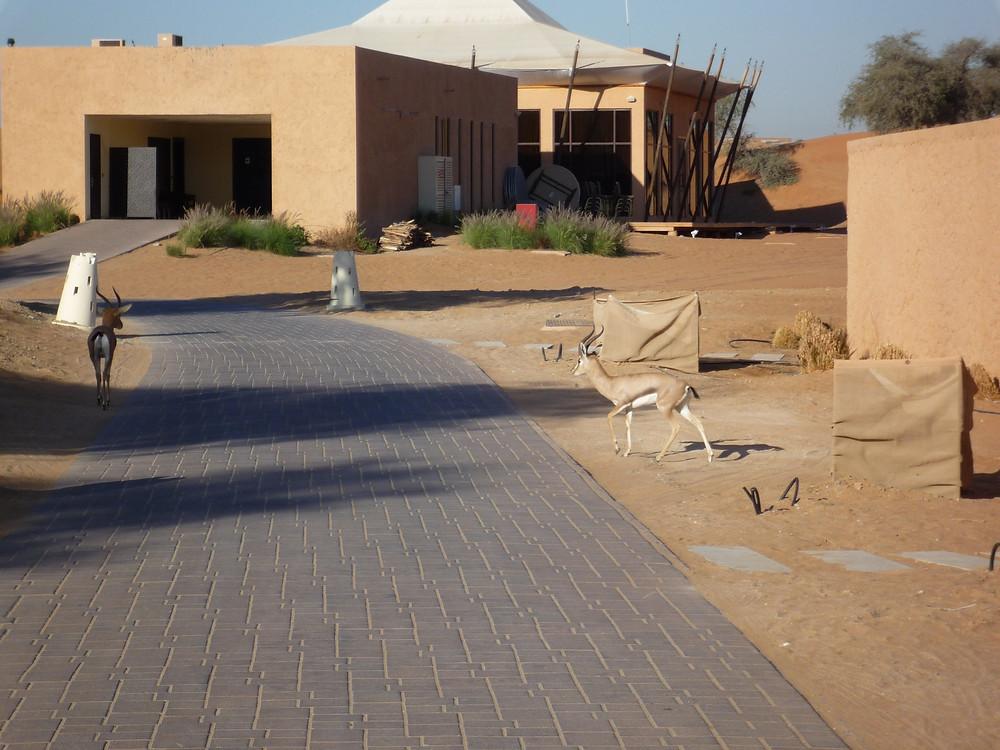 Al Wadi Desert