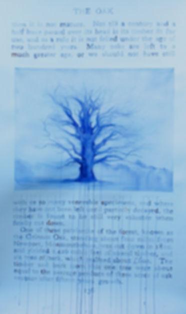 The Oak - IMG_1677_Fotor.jpg