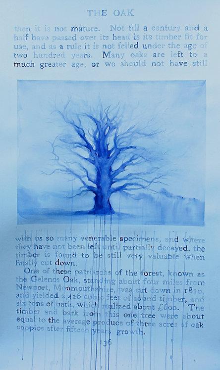 Edith Dormandy, '...Oak', 2020, watercolour on paper, 152x98cm
