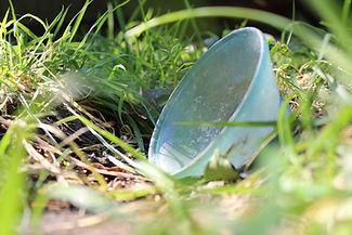 Bowl in Grass IMG_1741.JPG
