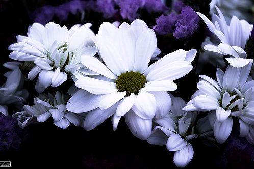 FLOWERS_LWHY_PHOTO