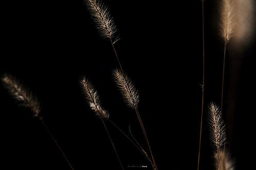 FOTOS_PLANTAS_LWHY_PHOTO_2019_1