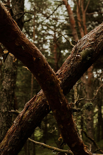 PRINT_FOREST_LWHY_PHOTO_MAY_19