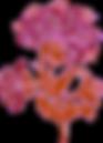 flor fantasia