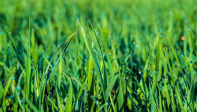green-grass-4317129_960_720.jpg