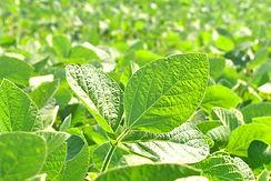 3-insecticidas.jpg