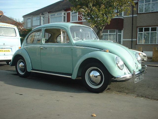 65 Bug