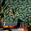 Thumbnail: Jardin
