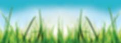 blades_of_grass_WIDE Sized.jpg