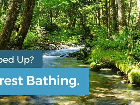 Feeling Cooped Up? Try Forest Bathing
