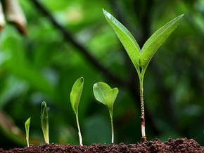 Do you know how to grow?